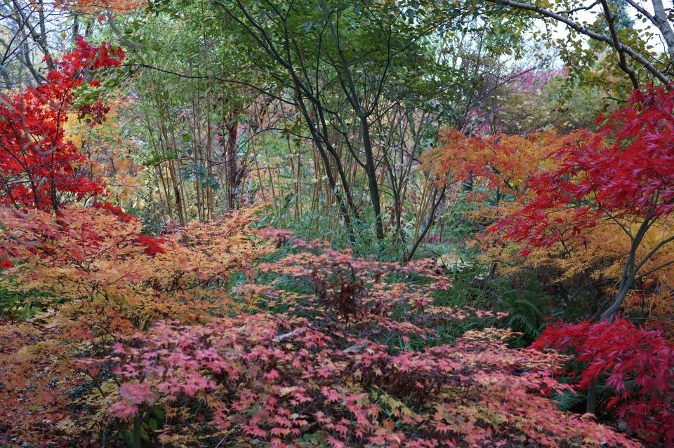 woodland acers